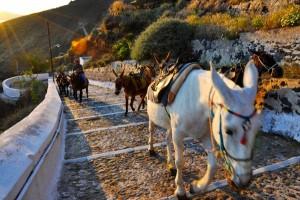santorini-donkeys