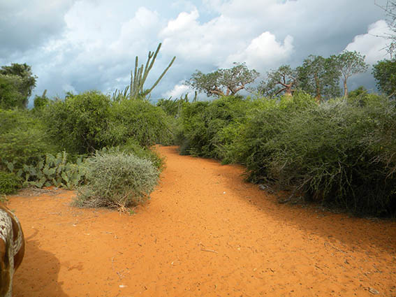 Intalnirea femeii din Nosy- Fii Madagascar