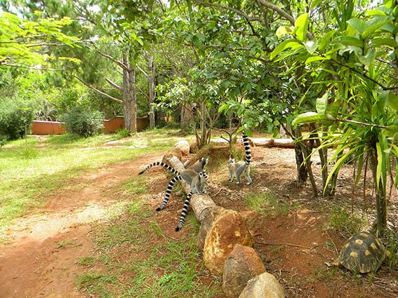 Madagascar cu o singura intalnire pentru femei)