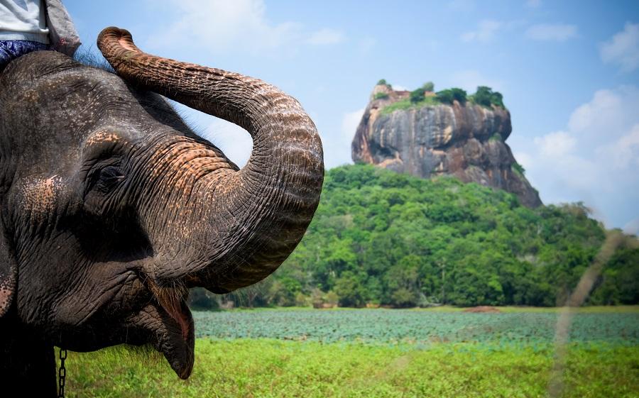 Sri Lanka 2019 - Primavara