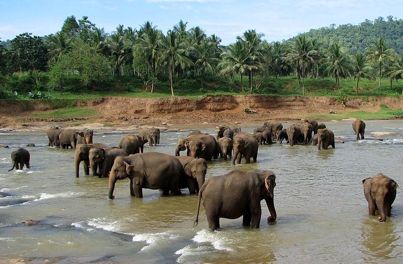 Sri Lanka 2018 - O Destinatie Tropicala Fascinanta