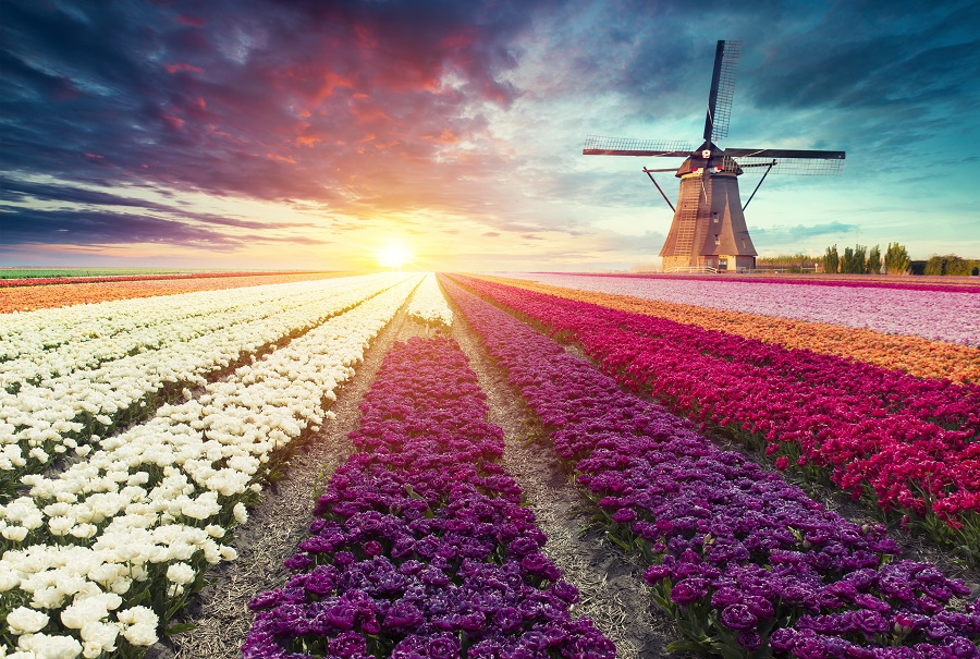 Amsterdam - Vara 2020