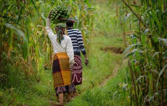 CIRCUIT <br> UGANDA & RWANDA