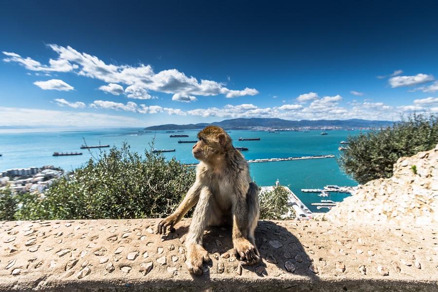 Costa Del Sol - Revelion 2020