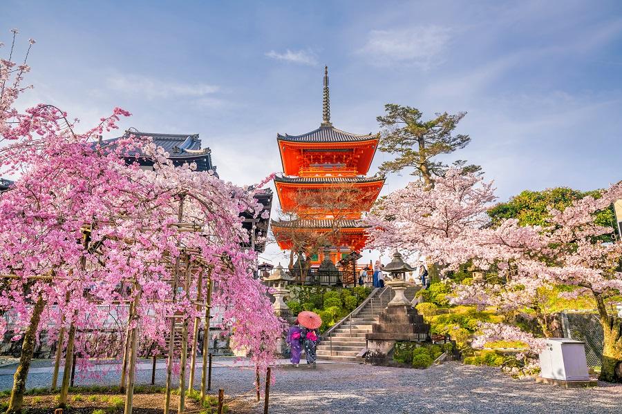 Japonia - Sarbatoarea Ciresilor In Floare - 2020