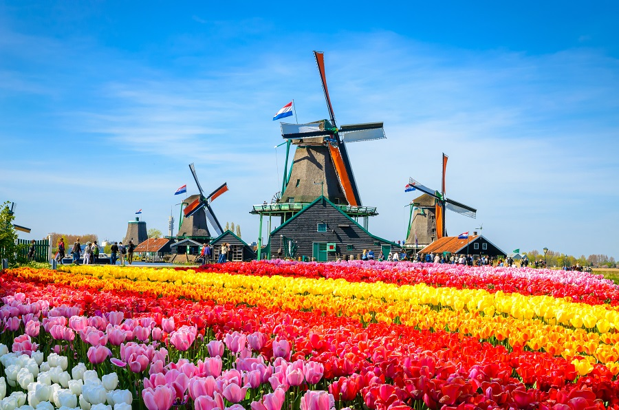 Amsterdam 2020 - Parada Florilor - Plecare Din Cluj