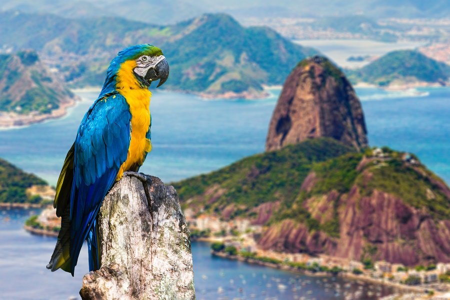 America De Sud 2020 - Toamna