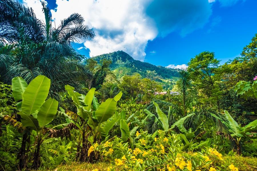 Madagascar 2020 - Calatorie In Tara Lemurienilor Si A Baobabilor