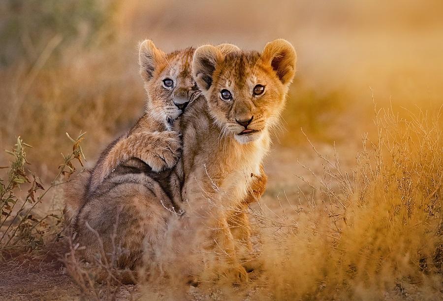 Kenya 2021 - Big Five Safari Si Plaja La Oceanul Indian