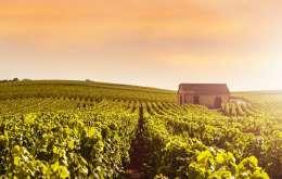 Franta 2021 - Burgundia Si Champagne